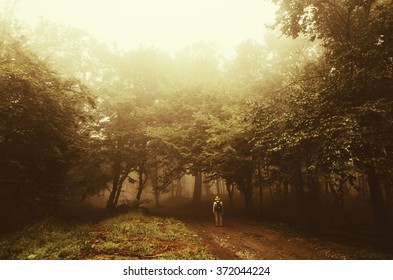 man wandering in golden sunset light in forest