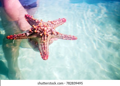 Man in water holding red starfish, Watamu, Kenya
