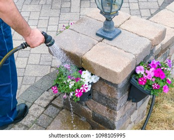 Man watering colorful spring petunias in hanging flowerpots on a pillar on his patio using a hosepipe and spray nozzle