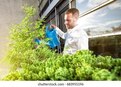 Man is watering the office plants at the balcony