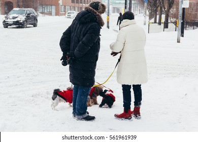 A man and a woman are at a city park and their two dogs meet. Two people meet because of their dogs. Cold Canadian winter snowfall in the city of Toronto.