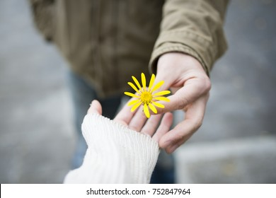 Man and woman hand over yellow flower