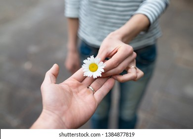 Man and woman handing over white flower