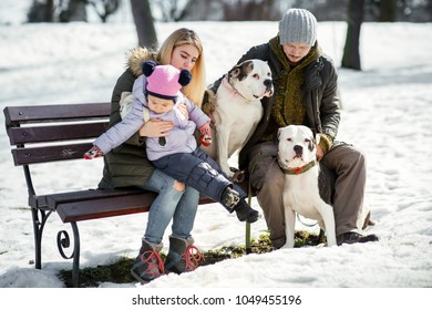 Man, woman and little girl play with two American bulldogs on the snow in park