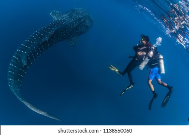 Man and woman observe Whaleshark (varied)