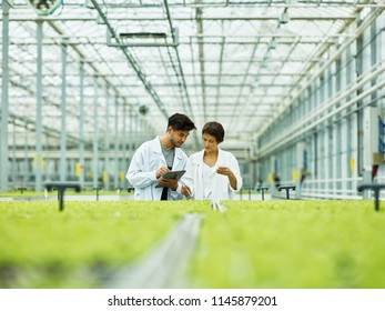 Man and woman in white coats having tablet and examining green sprouts growing inside of glasshouse of industrial agricultural complex