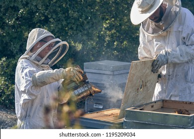 Man and woman working collecting honey. Beekeeping concept.