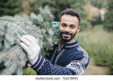 Man worker in a plantation prepares Christmas tree for sale