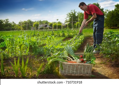 Man working in garden and looking on plants