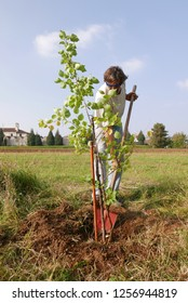 man working in the garden planting a apricot tree