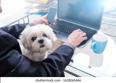Man working at home or office and holding his liitle dog.