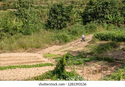 Man working the land by tea plantations around  Tulou at Unesco heritage site near Xiamen