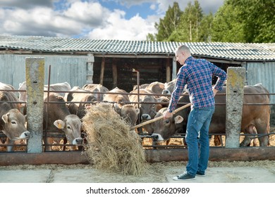 man working on farm cattle on a sunny day