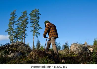 Man working with tree plantation