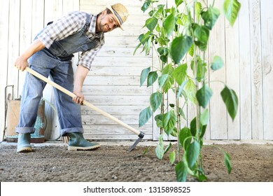 man working in the vegetable garden with the hoe, near green plants