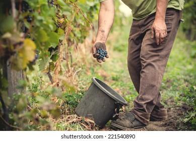 man working in a vineyard