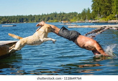 Man and Yellow lab dog jump into lake off dock together