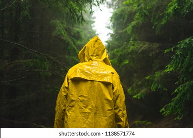 Man in yellow raincoat walking in the coniferous forest during rainy and foggy day.