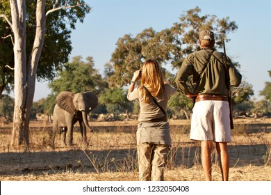 MANA POOLS - JUNE 2014: beautiful blonde girl with armed ranger observes closely an elephant during a walking safari in Mana Pools National Park