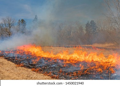 Managed Fire Burning into the Center in Spring Valley Nature Center in Schaumburg, Illinois