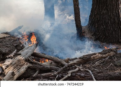 Management fire in Yosemite National Park - Rangers have set a small-scale, controlled fire in a forest in Tuolumne Meadows, Yosemite National Park, to prevent wildfires from spreading.
