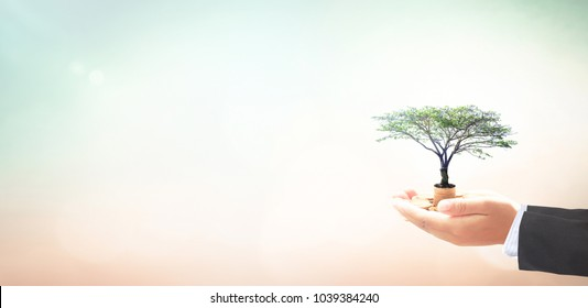 Managing fund concept: Businessman hand holding big tree and stack of golden coins over blurred nature background