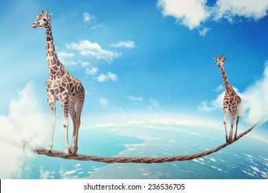 Managing risk big business challenges uncertainty concept. Two giraffes walking on dangerous rope high in sky as symbol of balance overcoming fear for goal success. Young entrepreneur corporate world