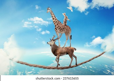 Managing risk business challenges uncertainty concept. Deer with giraffe, cat walking on dangerous rope high in sky symbol balance overcoming fear for goal success. Young entrepreneur corporate world