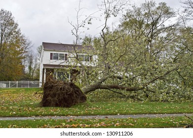 MANALAPAN, NEW JERSEY/USA -?? OCTOBER 30: A downed tree as a result of Huricaine Sandy on October 30 2012 in Manalapan, New Jersey.