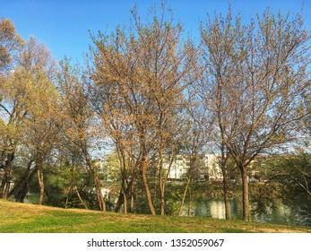 Manavgat, Antalya / Turkey - March 21, 2019: A river Manavgat seen through green trees, blue sky, Manavgat river in Antalya. River landscape from Manavgat, Antalya, Turkey.