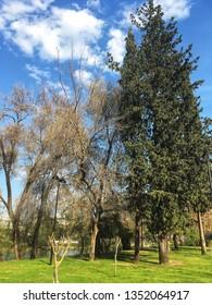 Manavgat, Antalya / Turkey - March 21, 2019: A river Manavgat seen through green trees, blue sky, clouds. Manavgat river in Antalya. Landscape from Manavgat, Antalya, Turkey.
