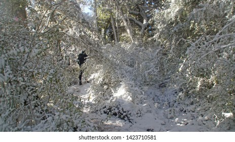 Manawatu-Wanganui, New Zealand - June 3rd 2019.  Tramping in the forest at Mt Urchin Track in winter when it covered in snow.