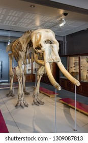 MANCHESTER - 2nd December 2018, Skelton of a Mammoth at University of Manchester Museum, Manchester