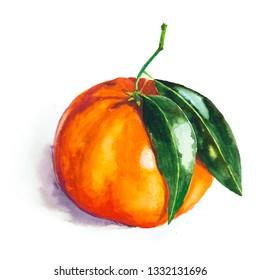 Mandarin with leaves, watercolor. Fruit watercolour illustration. Bright print for fabric or wallpaper. Vibrant juicy ripe citrus fruit. Hand drawn tangerine