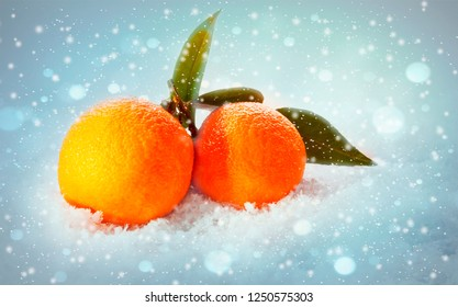 Mandarin oranges with leaves in snow background. Citrus just from the tree.Organic veg food.Winter fruits.
