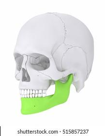 Mandible - mandibula 3D illustration
