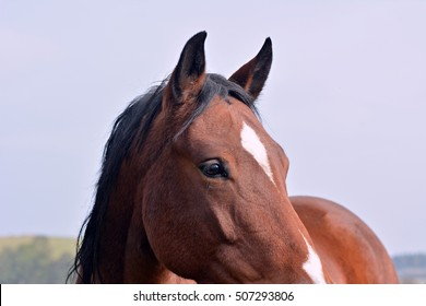 Mane horses