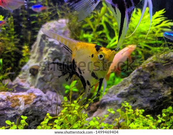 Manfish Fresh Water Ecosystem Aquascape Stock Photo Edit Now 1499469404