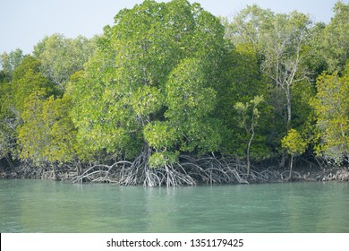 Manfrove forest of Sundarban Biosphere reserve. Sundarban is the largest delta in the world. Earth day