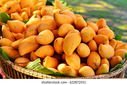 African Mango Images Stock Photos Vectors Shutterstock