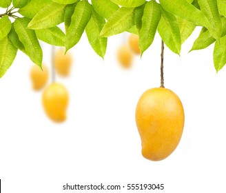 Mango fruit with leaf isolated white background