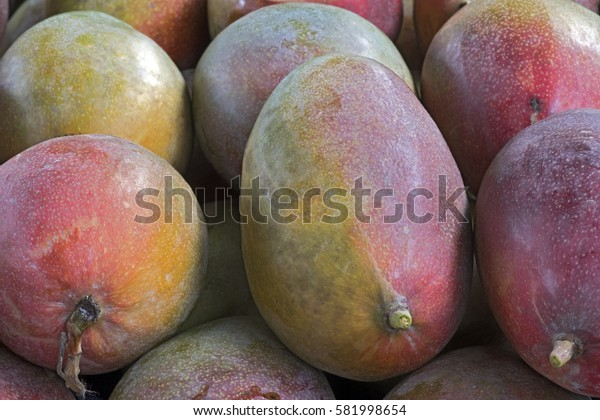 Mango, fruit originating in India, currently with more than 500 varieties, cultivated in several countries and appreciated around the world