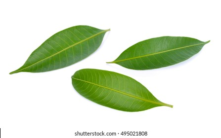 Mango leaf  isolated on white background