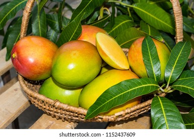 mangoes big and fresh