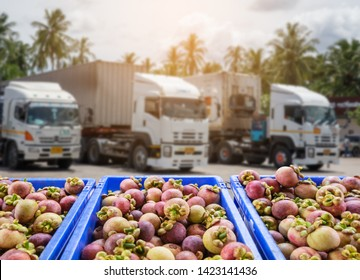 Mangosteen  Fruit and food distribution, tropical fruit of Thailand .Truck loaded with containers ready to be shipped to the market.