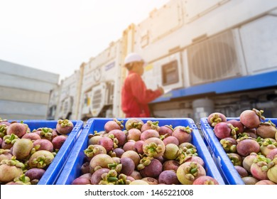 mangosteen Fruit and food distribution, tropical fruit of Thailand .Truck loaded with containers reefer control by ventilator mode to be shipped to the market.
