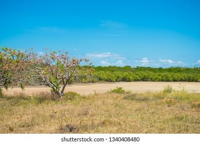 Mangroove area in the countryside of Itamaraca Island, Brazil