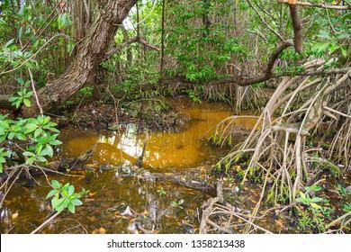 Mangroove in the countryside of Itamaraca Island, Brazil