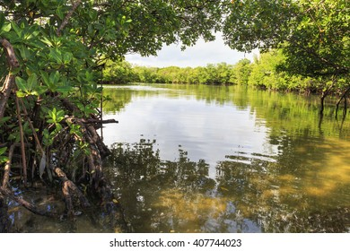 Mangrove arch over the river, Oleta State Park, Florida