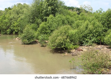 Mangrove area. Mangrove tree. Ecological nature. Water recreation area. Sea side area